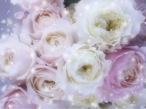 white&pinkのroseのbouquetのphoto