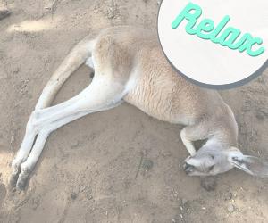 カンガルーが寝ている写真にrelaxと書いた文字