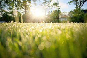 朝露と輝く太陽の写真
