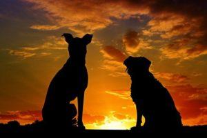 日が沈む夕方に犬2匹のシルエット